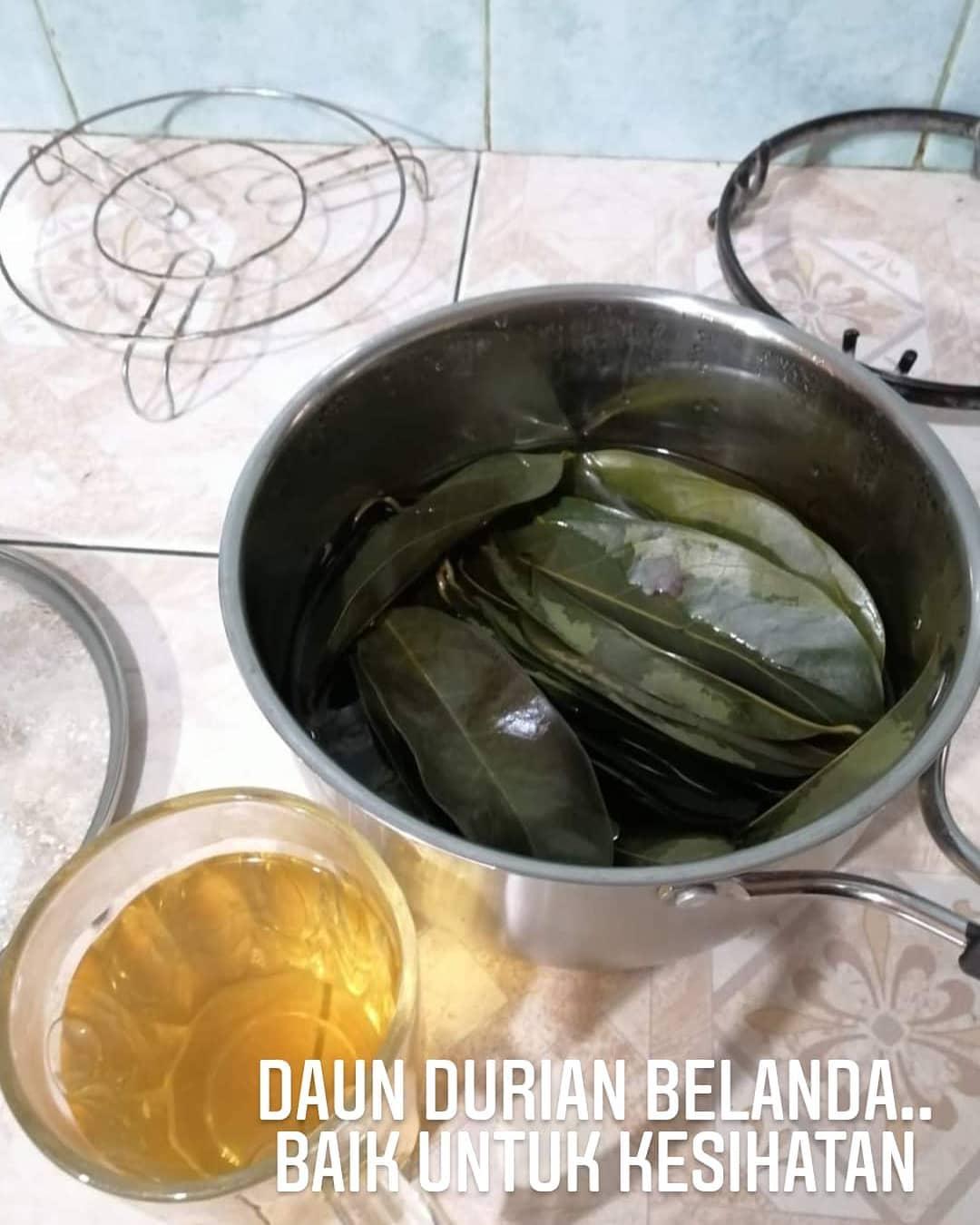 Manfaat Daun Durian Belanda